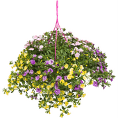 Hangplanten calibrachoa