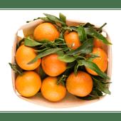Spaanse mandarijnen met blad