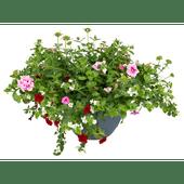 Bloemen Perkgoedschaal met waterreservoir