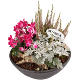 Bloemen Najaarsplanten in schaal
