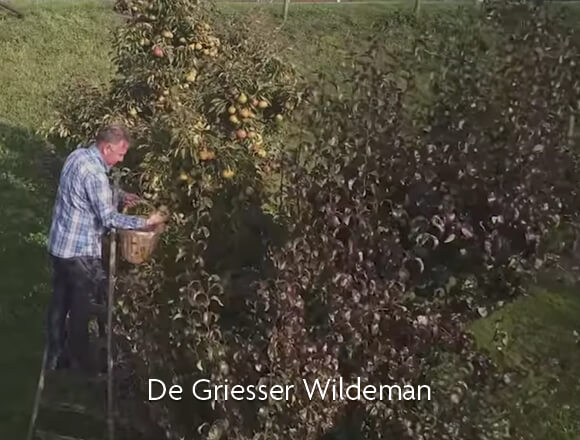 De Griesser Wildeman video