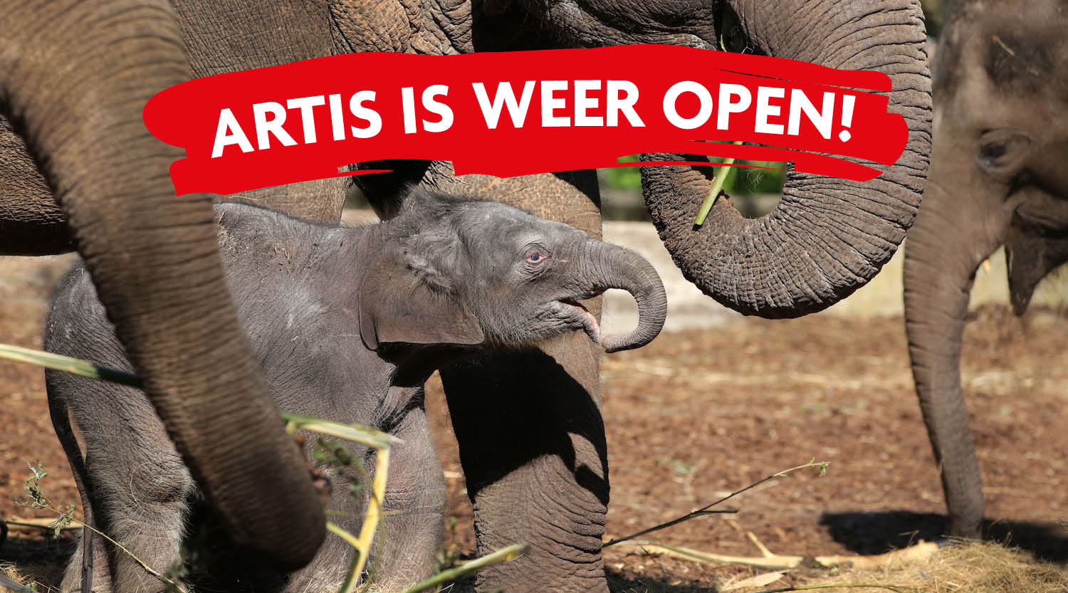 Artis-is weer open