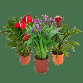 Luxe bloeiende plant